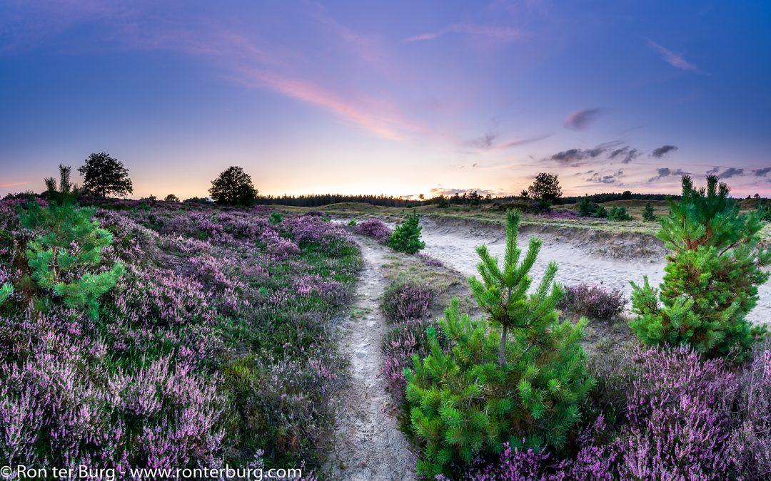 20200822 – Workshop Bloeiende Heide