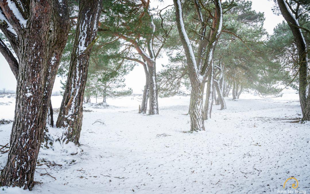 20210117 – Sneeuw!